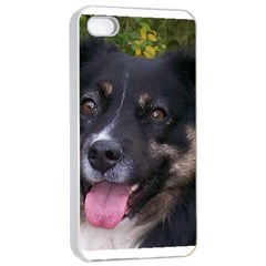 Australian Shepherd Black Tri Apple iPhone 4/4s Seamless Case (White)