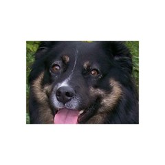 Australian Shepherd Black Tri YOU ARE INVITED 3D Greeting Card (8x4)