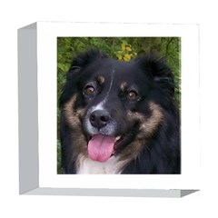 Australian Shepherd Black Tri 5  x 5  Acrylic Photo Blocks