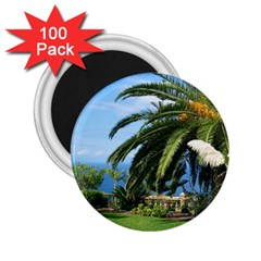 Sunny Tenerife 2.25  Magnets (100 pack)