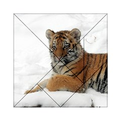 Tiger 2015 0101 Acrylic Tangram Puzzle (6  x 6 )