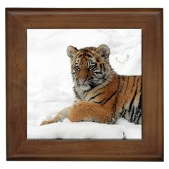 Tiger 2015 0101 Framed Tiles