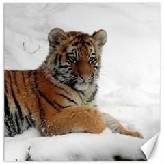 Tiger 2015 0102 Canvas 12  x 12