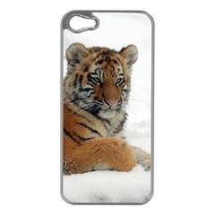 Tiger 2015 0102 Apple iPhone 5 Case (Silver)