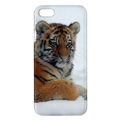 Tiger 2015 0102 Apple iPhone 5 Premium Hardshell Case