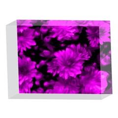 Phenomenal Blossoms Hot  Pink 5 x 7  Acrylic Photo Blocks