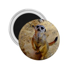 Lovely Meerkat 515p 2.25  Magnets