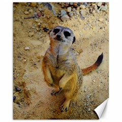 Lovely Meerkat 515p Canvas 16  x 20