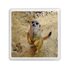 Lovely Meerkat 515p Memory Card Reader (square)