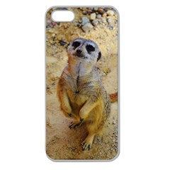 Lovely Meerkat 515p Apple Seamless iPhone 5 Case (Clear)