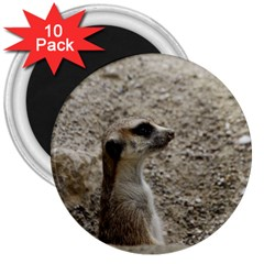 Adorable Meerkat 3  Magnets (10 pack)