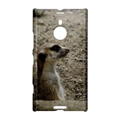 Adorable Meerkat Nokia Lumia 1520