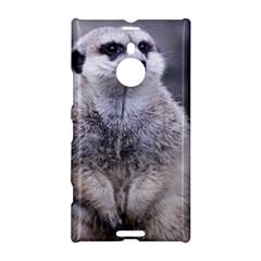 Adorable Meerkat 03 Nokia Lumia 1520