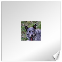 Australian Cattle Dog Blue Canvas 20  x 20