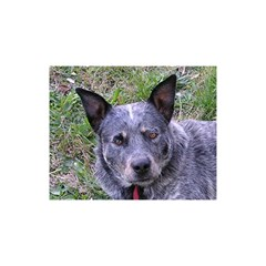 Australian Cattle Dog Blue YOU ARE INVITED 3D Greeting Card (8x4)