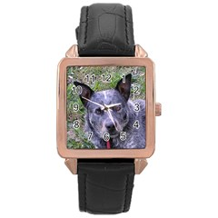 Australian Cattle Dog Blue Rose Gold Watches