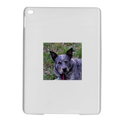 Australian Cattle Dog Blue iPad Air 2 Hardshell Cases