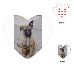 Malinois Puppy Sitting Playing Cards (Heart)