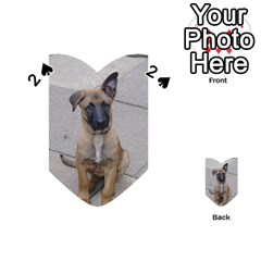 Malinois Puppy Sitting Playing Cards 54 (Heart)