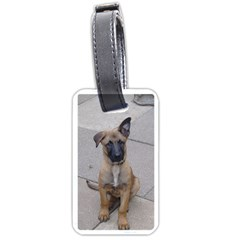 Malinois Puppy Sitting Luggage Tags (Two Sides)