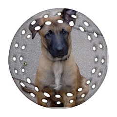 Malinois Puppy Sitting Ornament (Round Filigree)