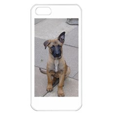Malinois Puppy Sitting Apple iPhone 5 Seamless Case (White)
