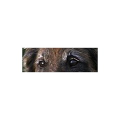 Belgian Tervueren Eyes YOU ARE INVITED 3D Greeting Card (8x4)