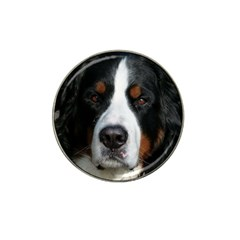 Bernese Mountain Dog Hat Clip Ball Marker (4 pack)