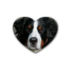 Bernese Mountain Dog Rubber Coaster (Heart)