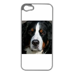 Bernese Mountain Dog Apple iPhone 5 Case (Silver)