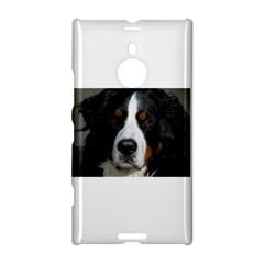 Bernese Mountain Dog Nokia Lumia 1520