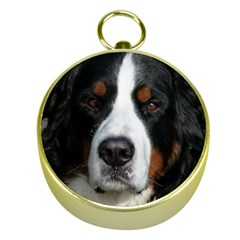Bernese Mountain Dog Gold Compasses