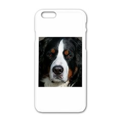 Bernese Mountain Dog Apple iPhone 6/6S White Enamel Case