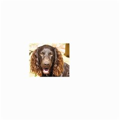 Boykin Spaniel Small Garden Flag (Two Sides)
