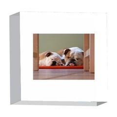 2 Sleeping Bulldogs 5  x 5  Acrylic Photo Blocks