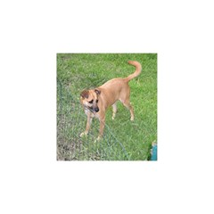Carolina Dog Full 2 YOU ARE INVITED 3D Greeting Card (8x4)
