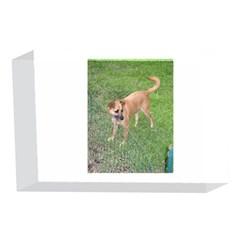 Carolina Dog Full 2 4 x 6  Acrylic Photo Blocks