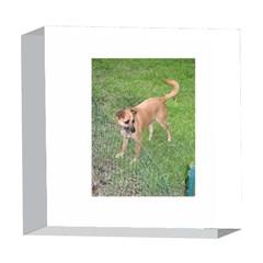 Carolina Dog Full 2 5  x 5  Acrylic Photo Blocks