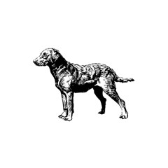 Chesapeake Bay Retriever Drawing YOU ARE INVITED 3D Greeting Card (8x4)