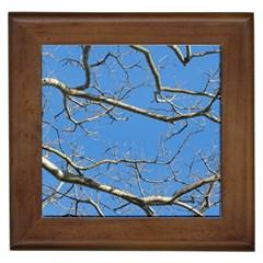 Leafless Tree Branches Against Blue Sky Framed Tiles