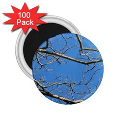 Leafless Tree Branches Against Blue Sky 2.25  Magnets (100 pack)