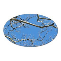 Leafless Tree Branches Against Blue Sky Oval Magnet