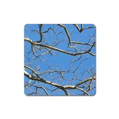 Leafless Tree Branches Against Blue Sky Square Magnet