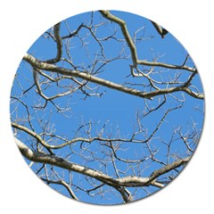 Leafless Tree Branches Against Blue Sky Magnet 5  (Round)