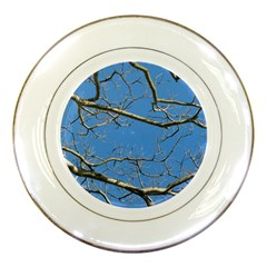 Leafless Tree Branches Against Blue Sky Porcelain Plates