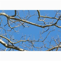 Leafless Tree Branches Against Blue Sky Collage 12  x 18