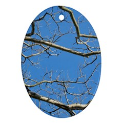 Leafless Tree Branches Against Blue Sky Oval Ornament (Two Sides)