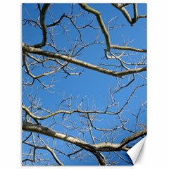 Leafless Tree Branches Against Blue Sky Canvas 12  x 16