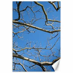 Leafless Tree Branches Against Blue Sky Canvas 12  X 18