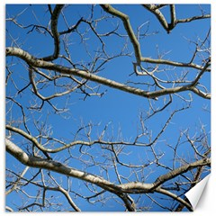 Leafless Tree Branches Against Blue Sky Canvas 16  x 16